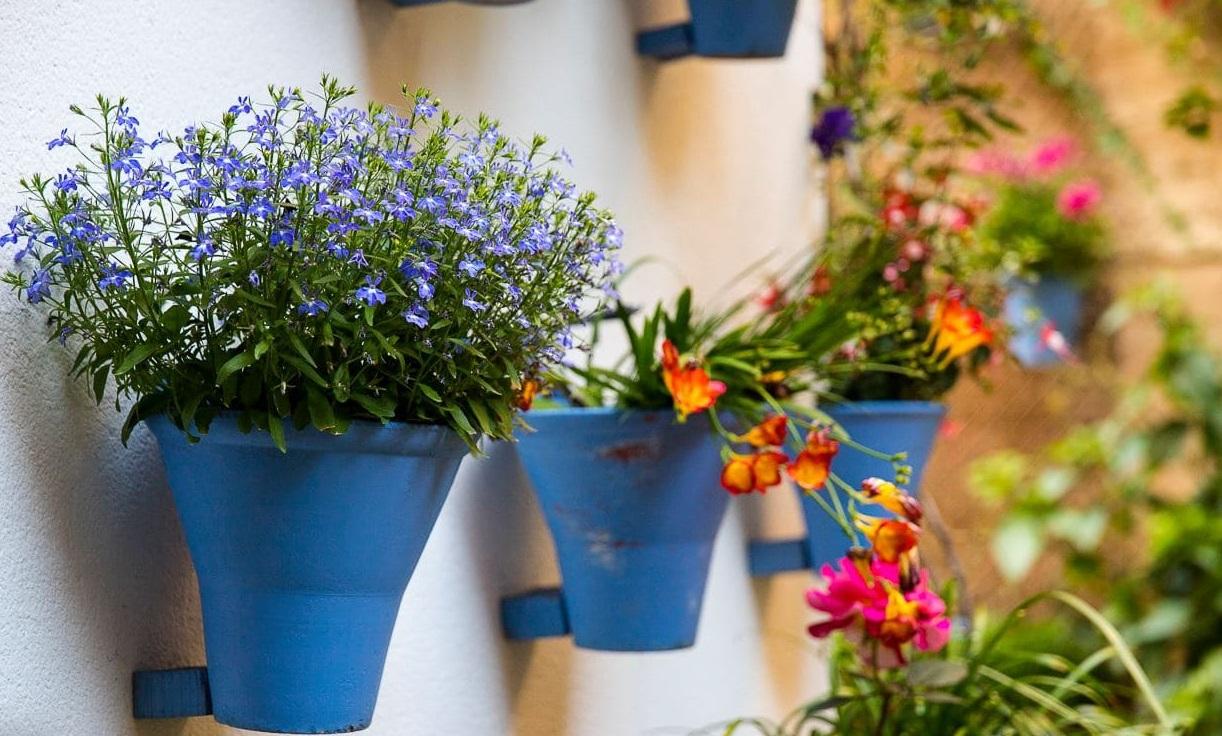 Alquimia Floral